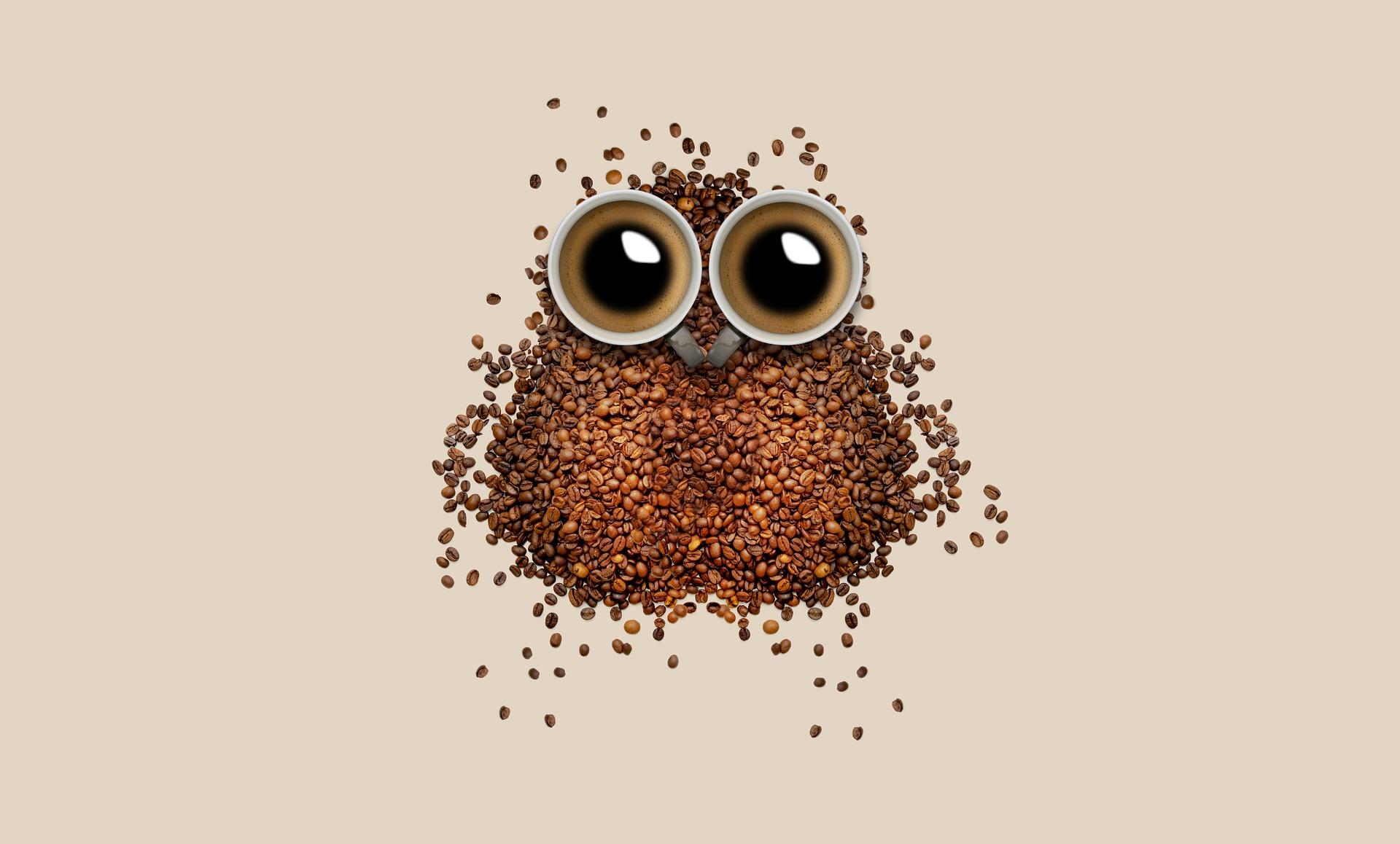 café, CORUJA, Copa, grãos de café, olhos, Brown - Papéis de parede - Professor-falken.com