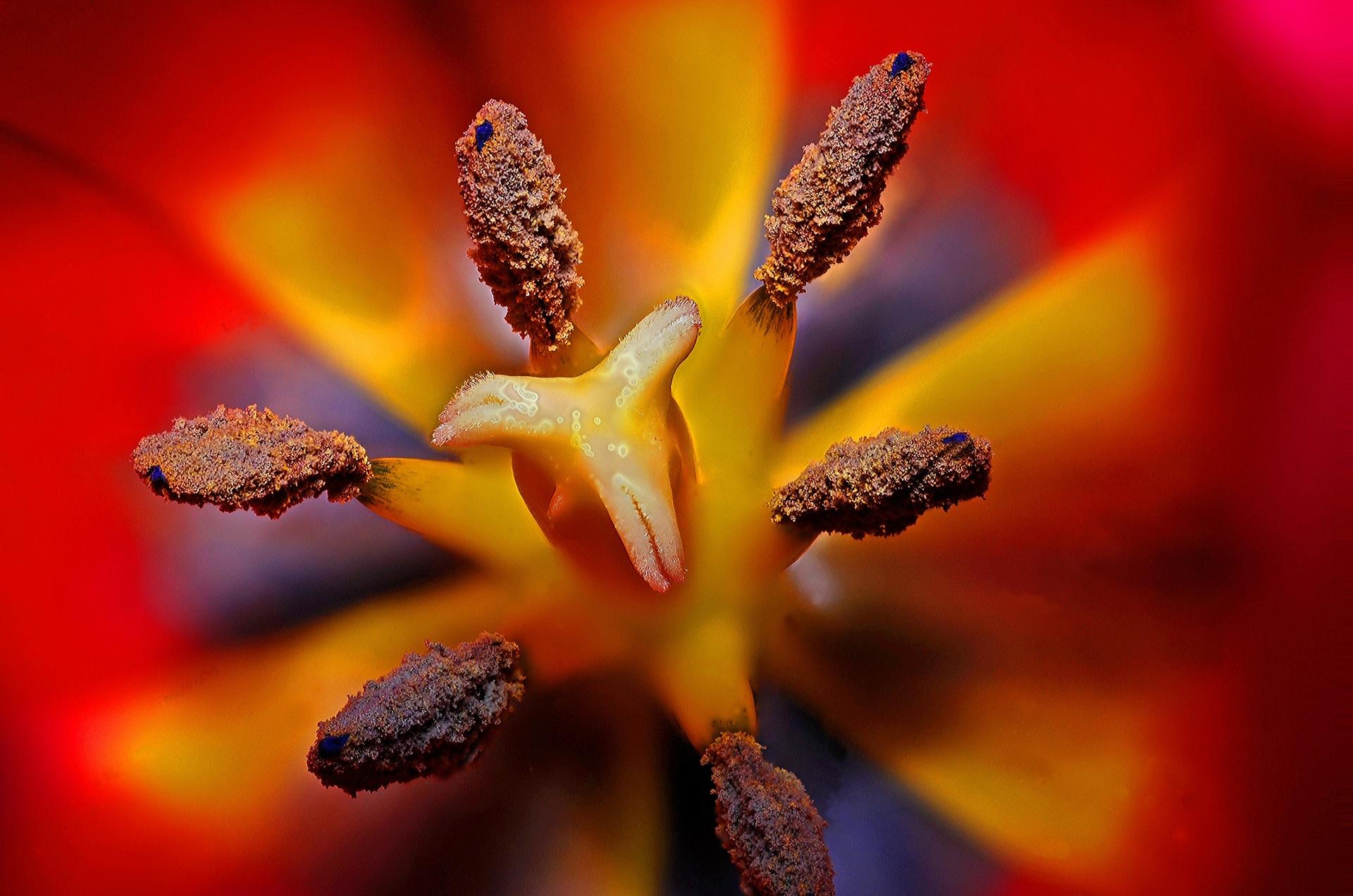 flor, florecer, estambre, polinización, rojo - Fondos de Pantalla HD - professor-falken.com