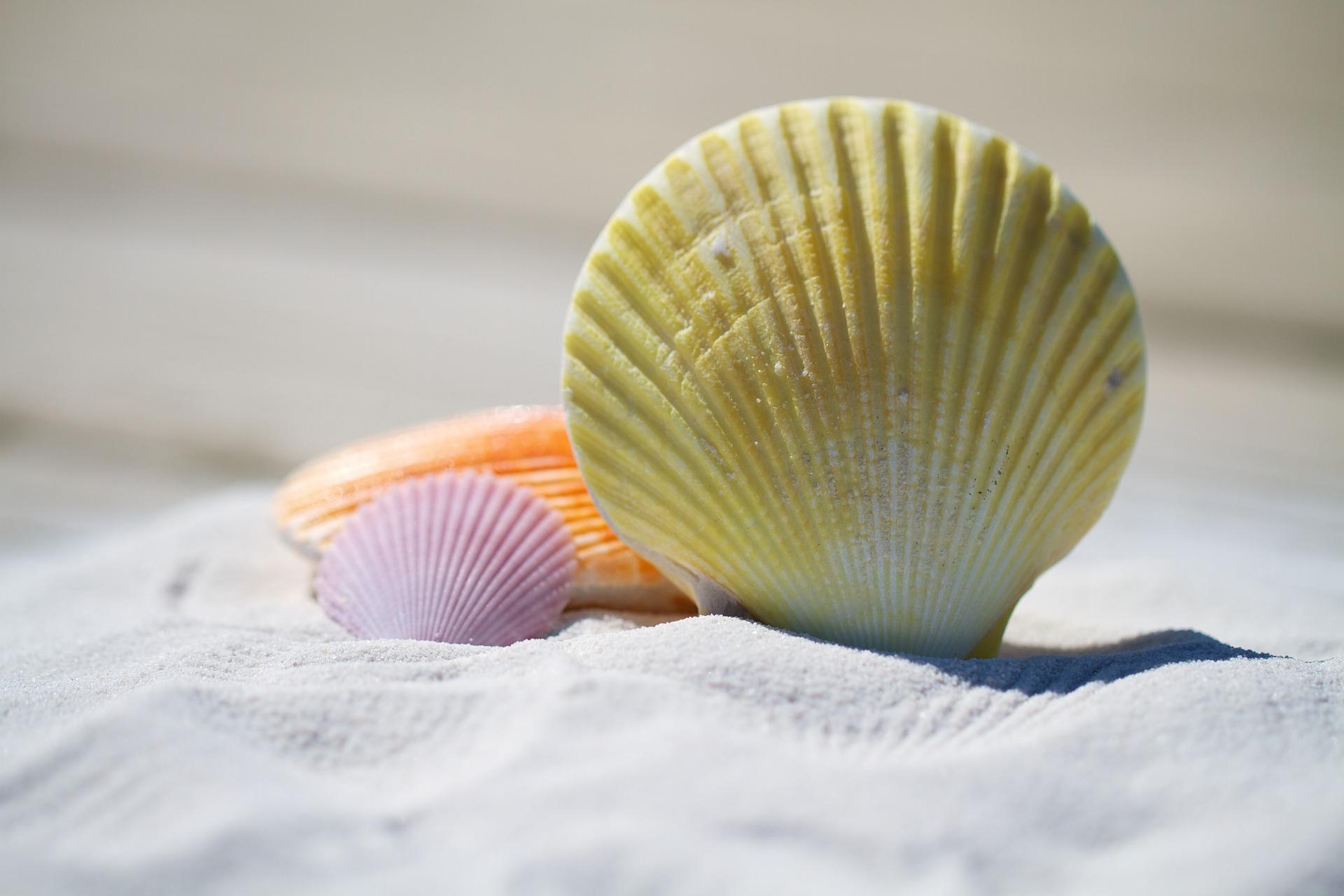 贝壳, 沙子, 海滩, 文蛤, 颜色 - 高清壁纸 - 教授-falken.com