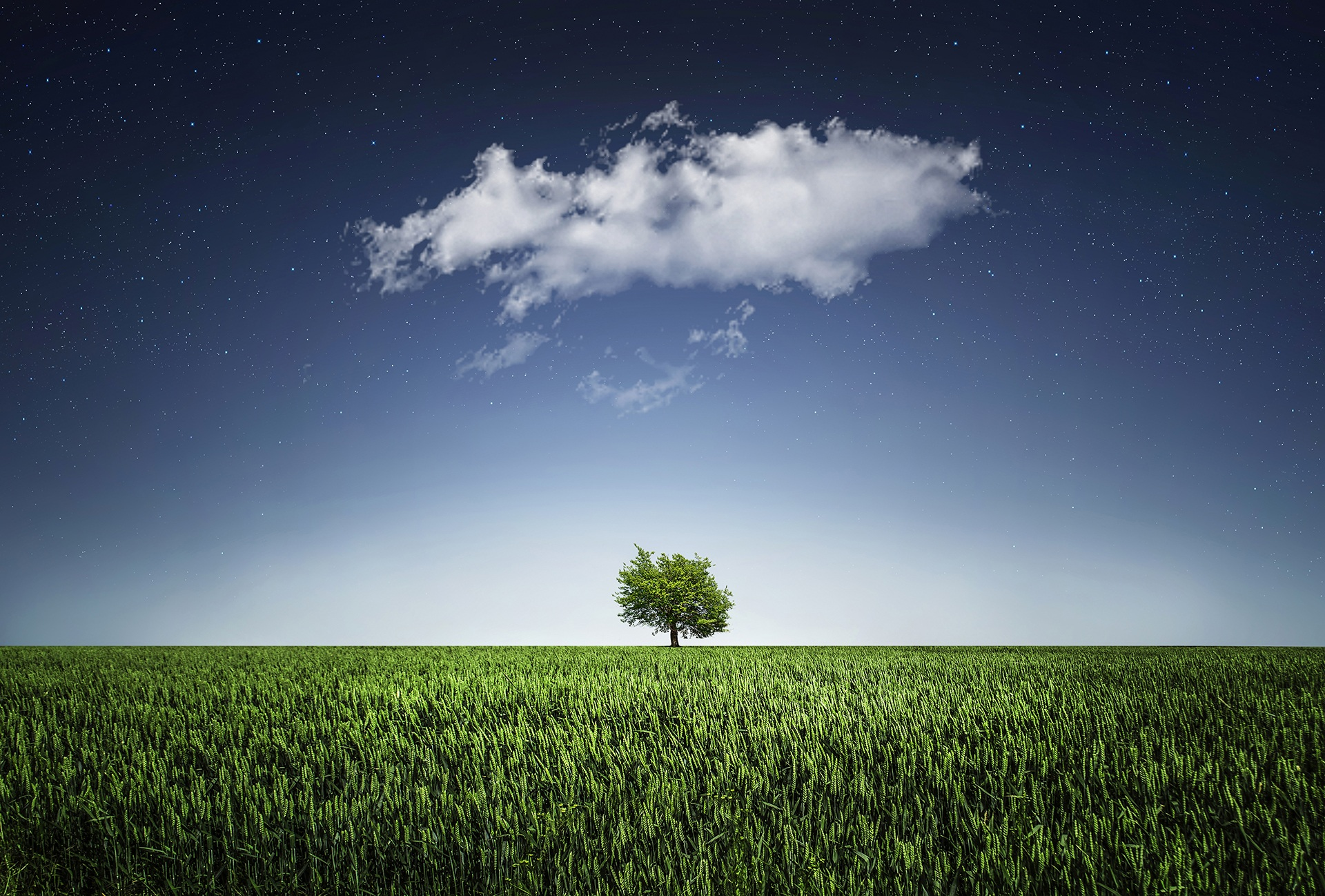 树, 平原, 云计算, 天空, 索莱达 - 高清壁纸 - 教授-falken.com