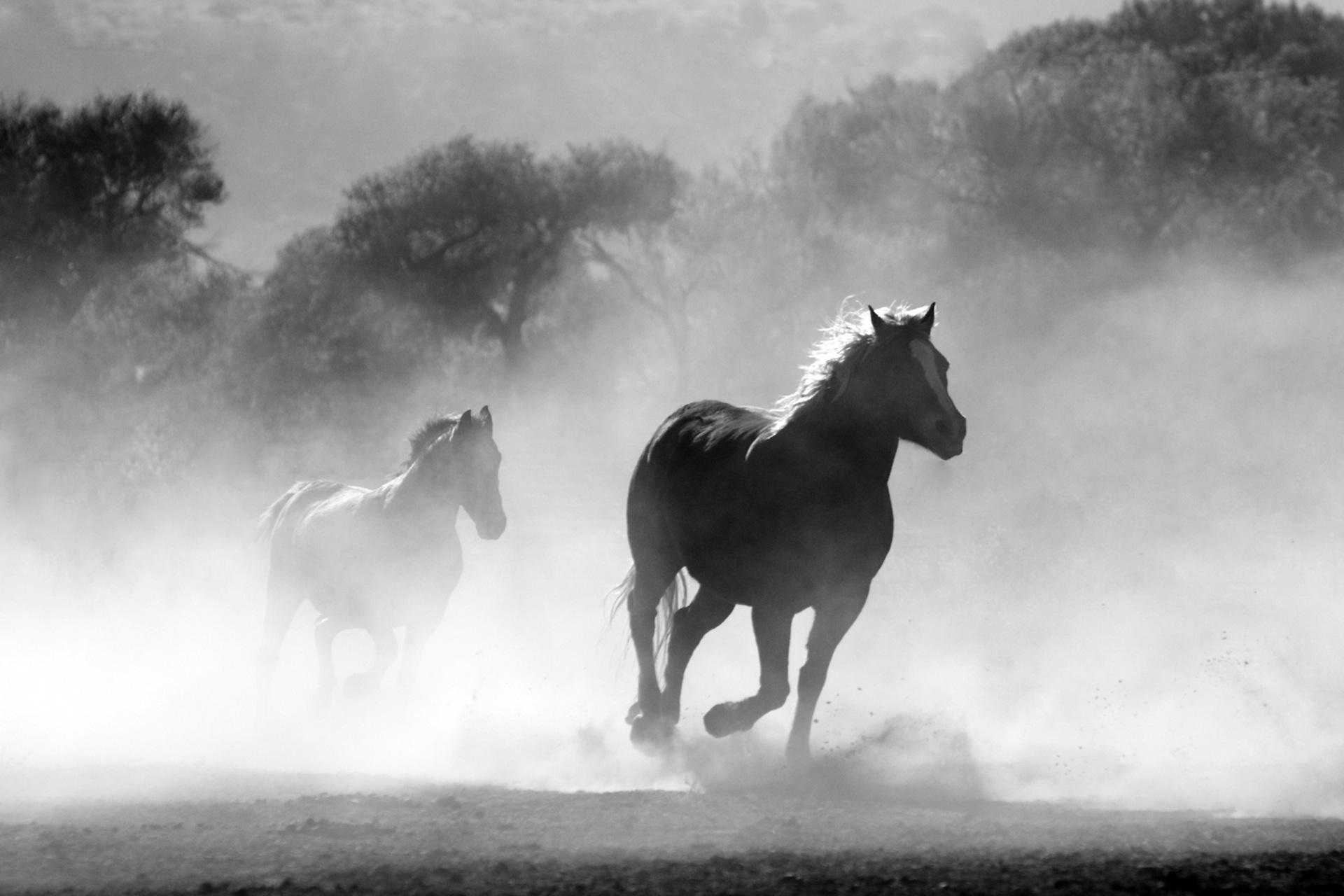 馬, 野生, 自由, キャリア, 粉体 - HD の壁紙 - 教授-falken.com