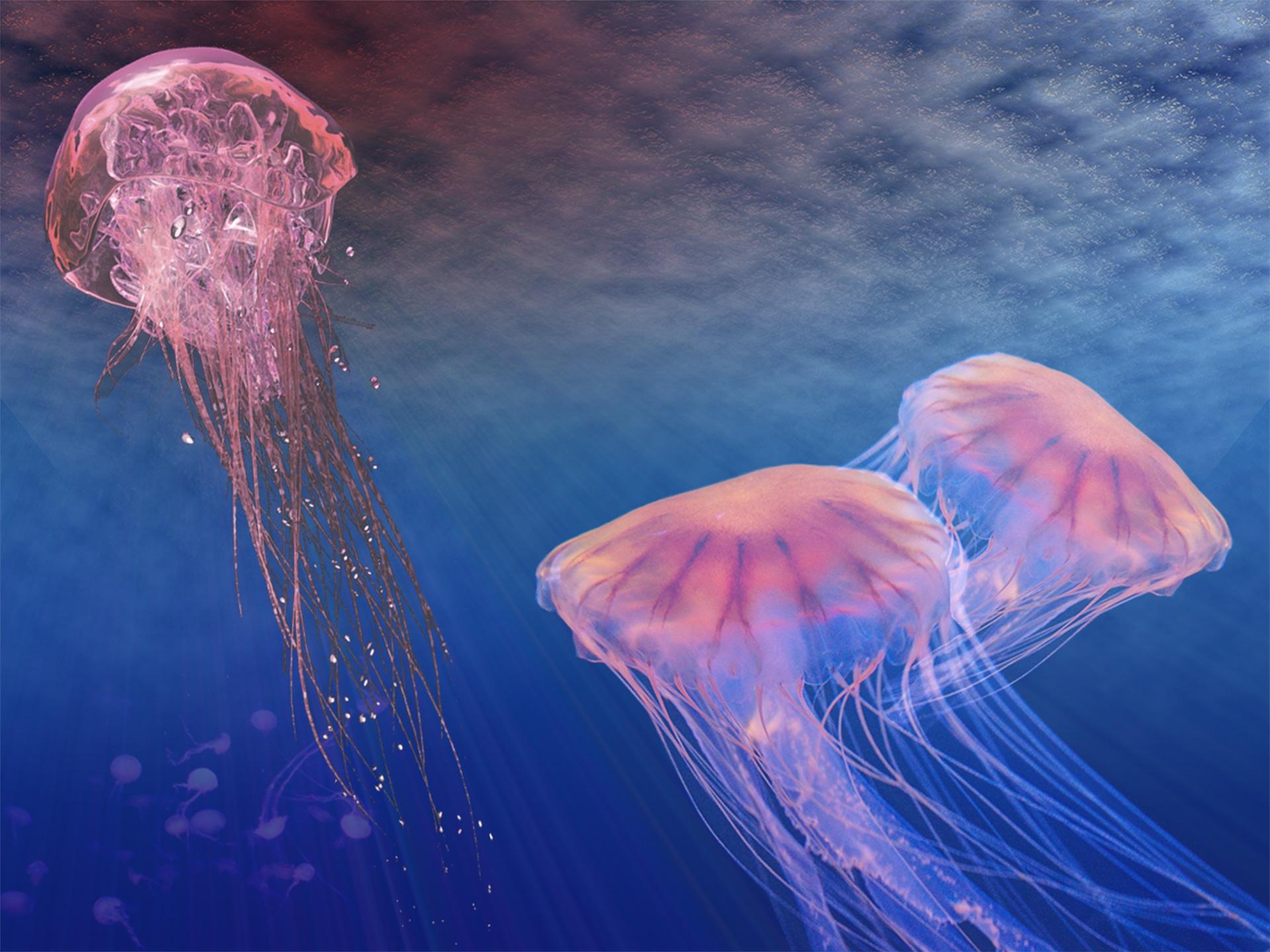 méduse, vie marine, Mer, Océan, profondeurs, Rosa - Fonds d'écran HD - Professor-falken.com