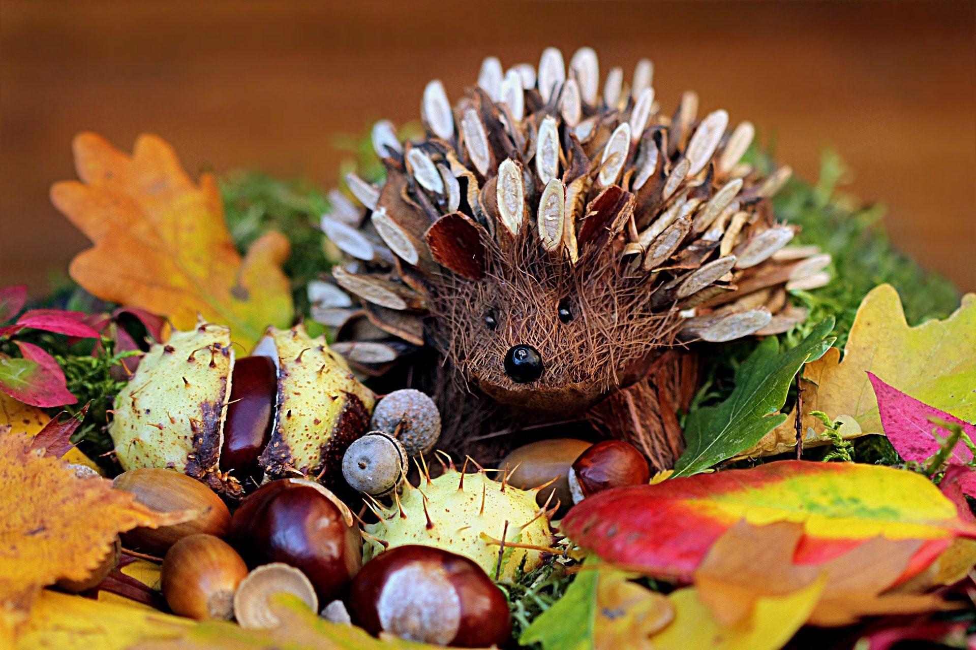 Еж Соник, Украшение, листья, Желуди, сухие - Обои HD - Профессор falken.com