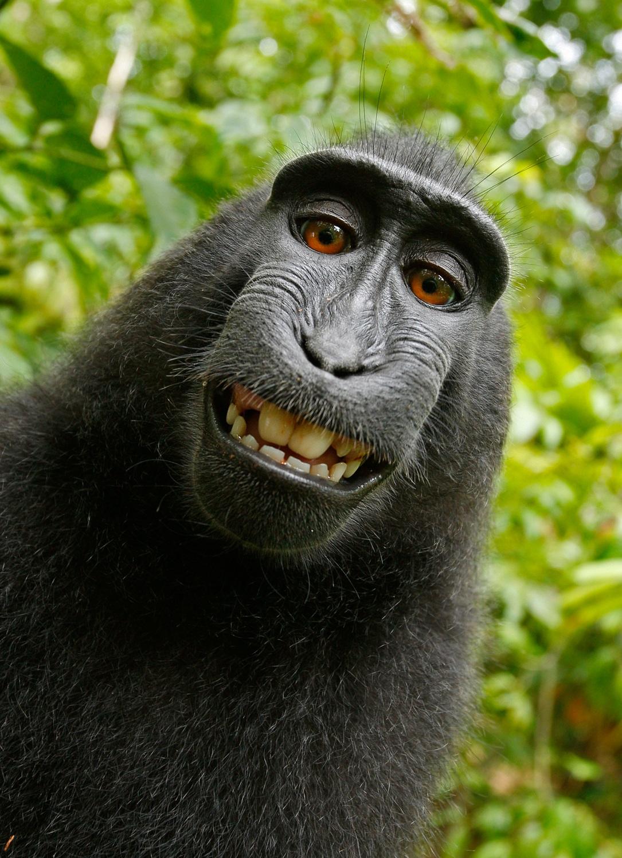 selfie, mono, Macara nigra, primate, animales - Fonds d'écran HD - Professor-falken.com