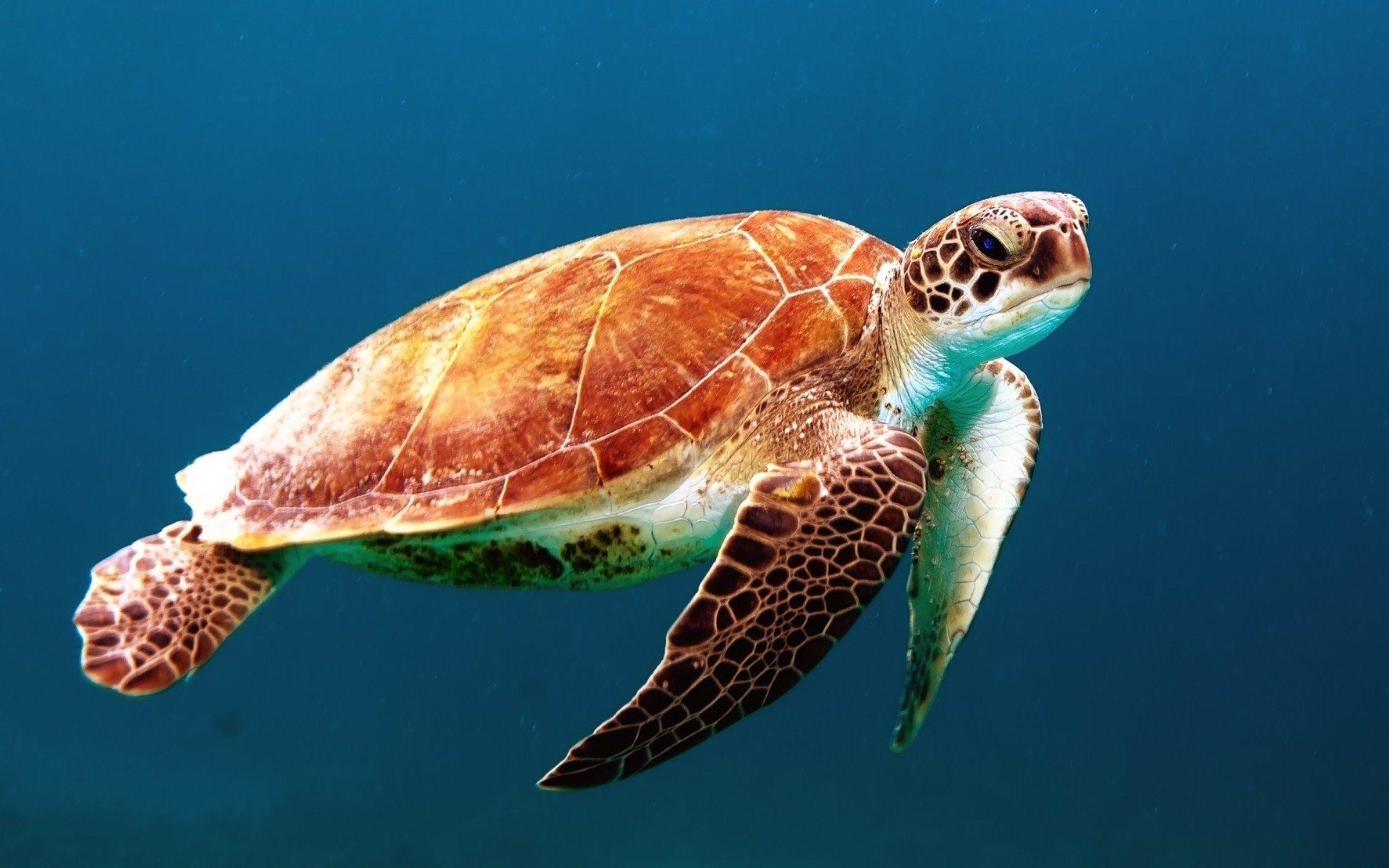 Черепаха, Марина, Океан, Подводный, красочные - Обои HD - Профессор falken.com