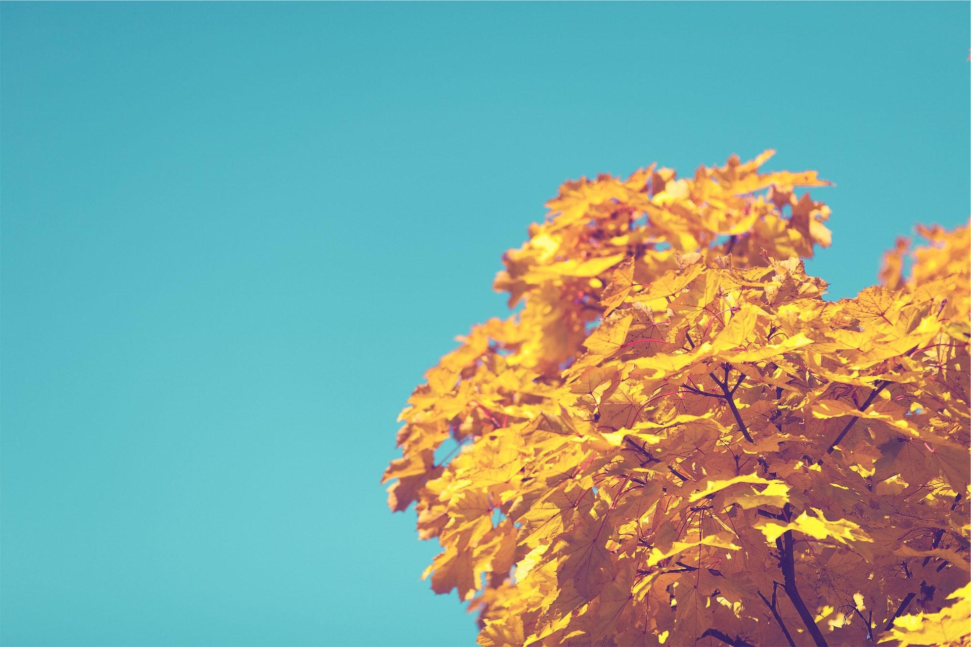 árvore, filial, folhas, seca, Outono - Papéis de parede HD - Professor-falken.com