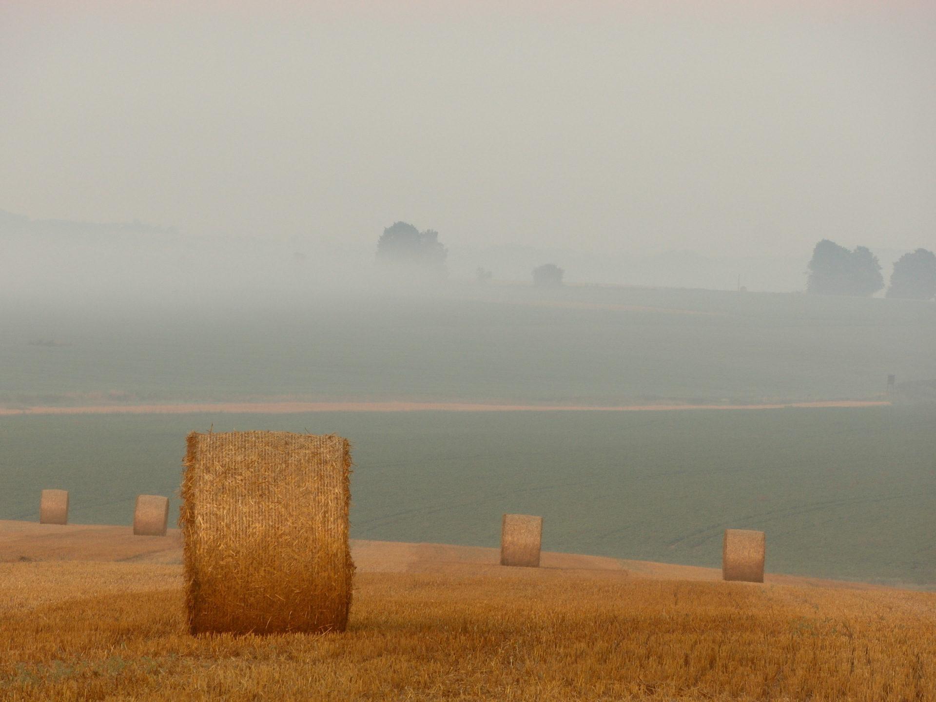 άχυρο, χλόη, Rulo, Pradera, ομίχλη - Wallpapers HD - Professor-falken.com