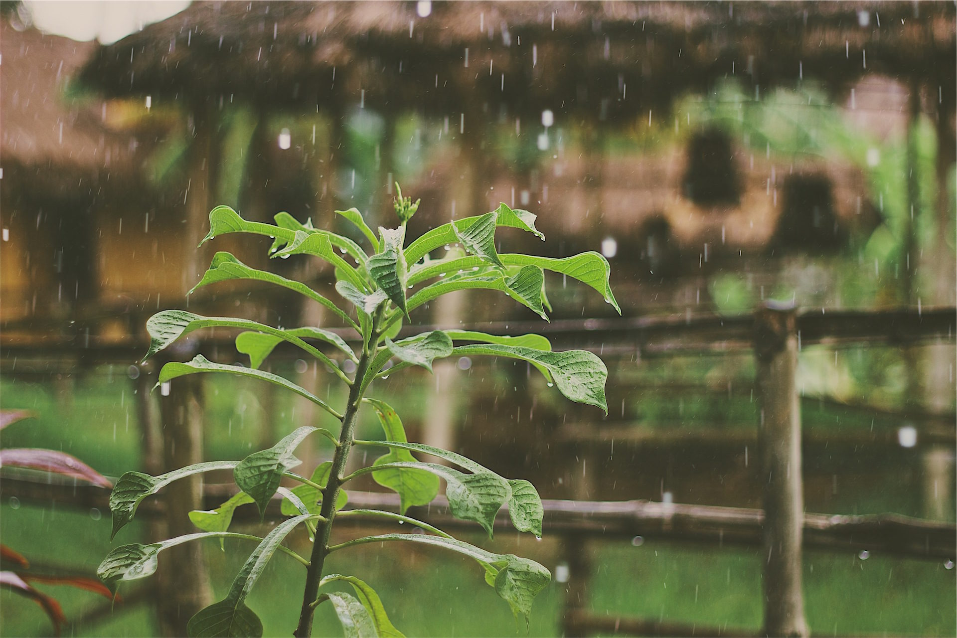piano terra, pioggia, staminali, acqua, sopravvivenza - Sfondi HD - Professor-falken.com