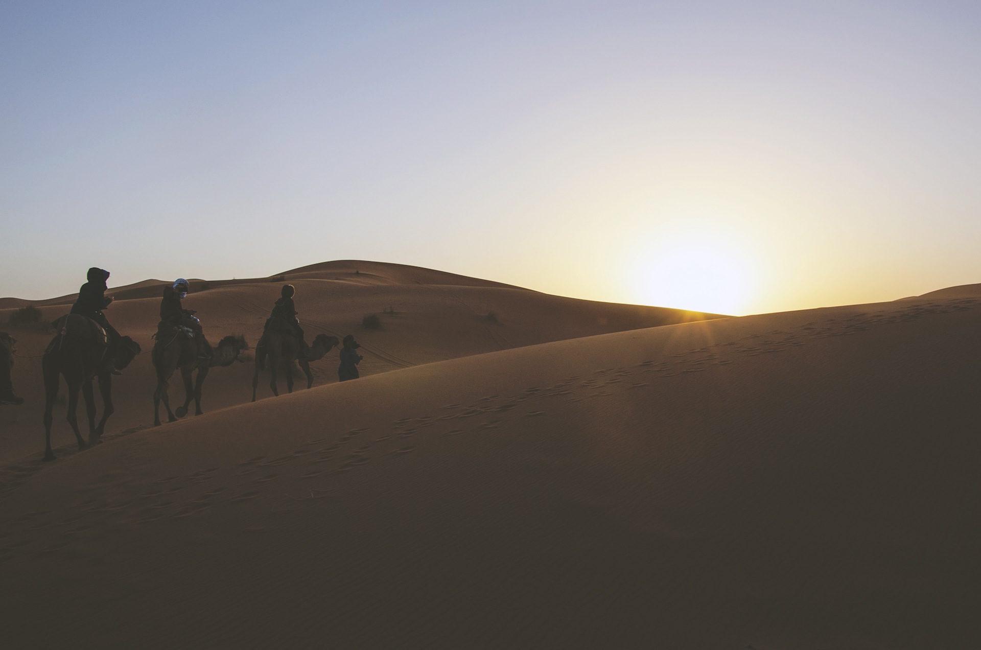 रेगिस्तान, ऊंट, रेत, नक्शेकदम, ,सूर्य - HD वॉलपेपर - प्रोफेसर-falken.com