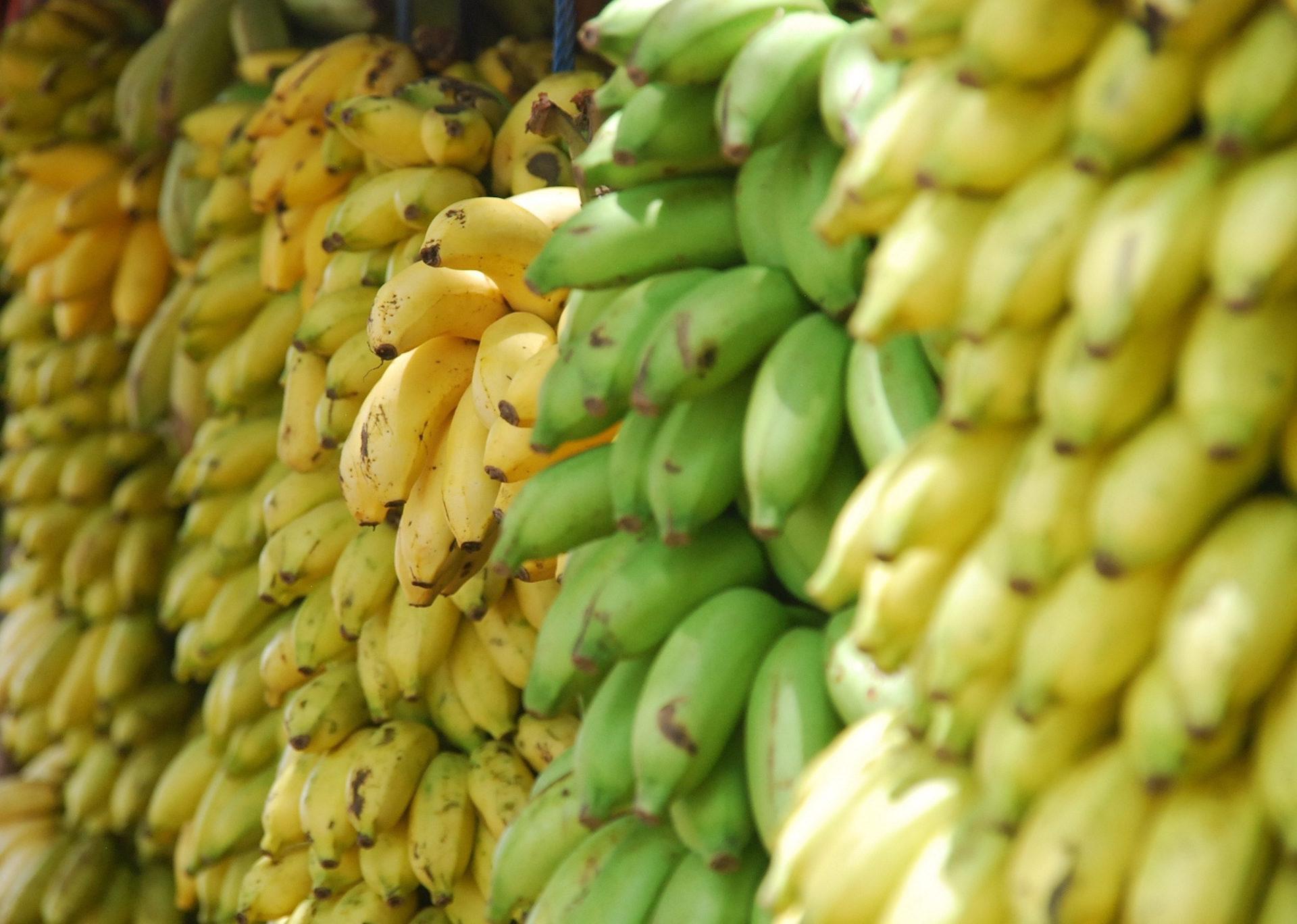 plátanos, bananas, frutas, clusters de, Amarelo - Papéis de parede HD - Professor-falken.com
