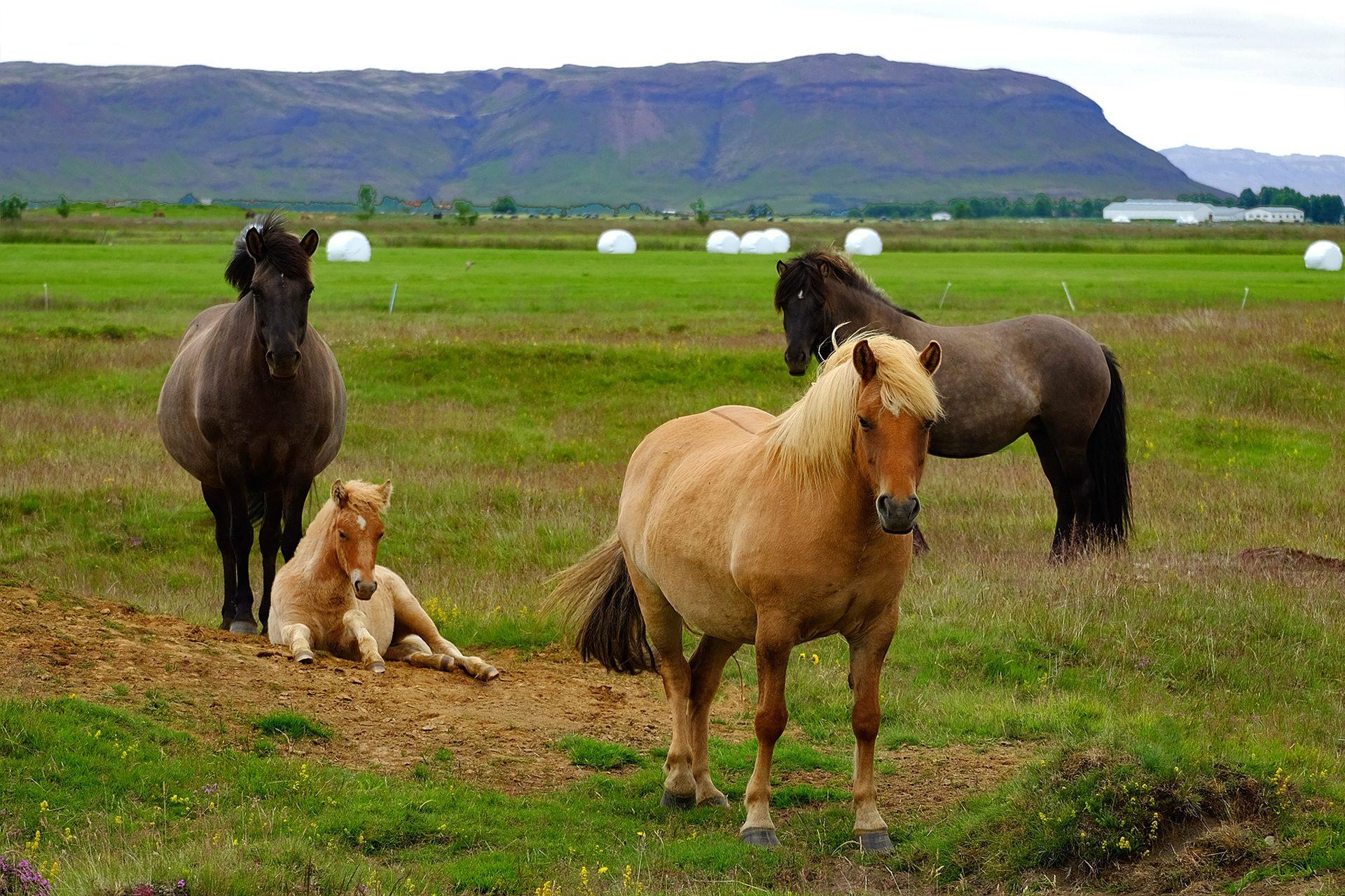 Fondo de pantalla de caballos pony island s familia - El valle de los caballos ...